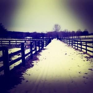 Bridle path behind the farm