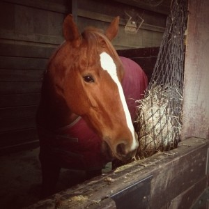 Circe, hanging in her stall