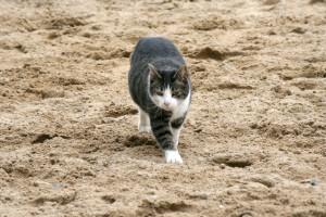 Flossie- The best kinda barn cat!
