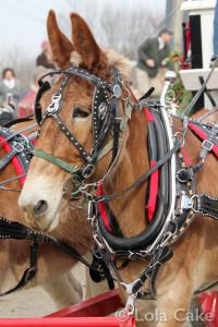 Mule train!